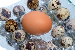 Quail eggs and chicken egg Royalty Free Stock Photos