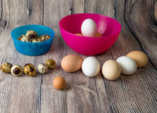 Quail eggs and chicken eggs are in plastic bowls pink and blue on the inside and outside in a semi-circle on a wooden table Royalty Free Stock Photo