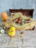 Quail eggs and chocolate eggs on the table Stock Images