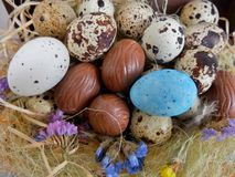 Quail eggs and chocolate eggs on the table Stock Image