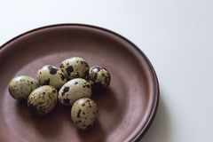 Quail eggs on clay plate on white background. Closeup photo.  Royalty Free Stock Photos
