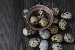 Quail eggs in clay pot on dark background. Stock Images
