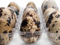 Quail eggs close-up. Stock Images