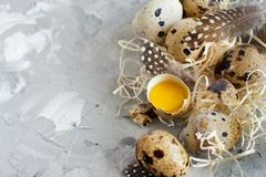 Quail eggs close up. On a grey background Stock Images