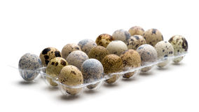 Quail eggs  close-up Stock Images
