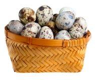 Quail eggs. Close up Stock Photos