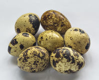 Quail eggs. Close up of quail eggs with white background Stock Image