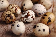 Quail eggs. Close-up of quail eggs on wooden background Stock Photo