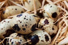 QUAIL EGGS. In coconut nest Stock Photography