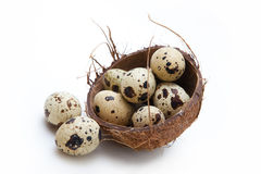 QUAIL EGGS. In coconut nest on white background Royalty Free Stock Photo