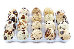 Quail eggs in the container on white background. stock photos