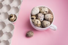 Quail eggs in cup and cardboard packaging on pink background..Vegetarian organic food. Eco products cocept.  stock image