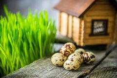 Quail eggs and decoration Royalty Free Stock Images