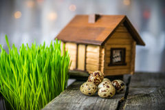 Quail eggs and decoration Royalty Free Stock Image