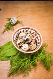 Quail eggs in dish. Some small quail eggs in dish  with fresh dill and sorrel Stock Images