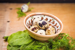 Quail eggs in dish. Some small quail eggs in dish  with fresh dill and sorrel Stock Image