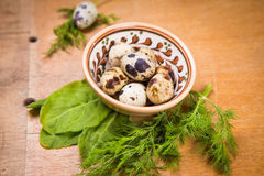 Quail eggs in dish. Some small quail eggs in dish  with fresh dill and sorrel Royalty Free Stock Photo