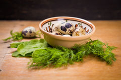Quail eggs in dish. Some small quail eggs in dish  with fresh dill and sorrel Stock Photo
