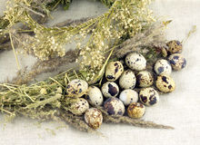 Quail eggs with dry grass on canvas Royalty Free Stock Images