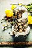 Quail eggs with easter decorations Stock Photos