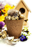 Quail eggs with easter decorations Royalty Free Stock Photo