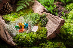 Quail eggs for Easter in forest at sunrise Stock Photography