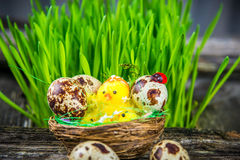 Quail eggs for easter Stock Photo