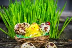 Quail eggs for easter Stock Photo