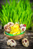 Quail eggs for easter Stock Image