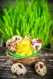 Quail eggs for easter Stock Image