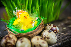 Quail eggs for easter Royalty Free Stock Image