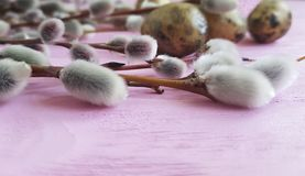 Quail eggs easter peace vinta branch nature of a beautiful decoration willow tradition on a pink wooden background stock photo