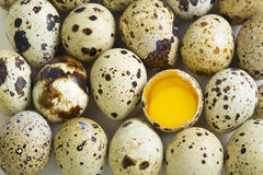Quail eggs and egg with two yolks. Stock Images