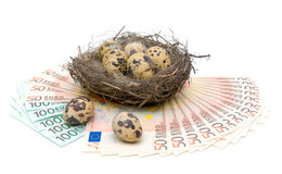 Quail eggs and euro on white background Royalty Free Stock Photography
