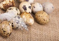 Quail eggs and feather lie on a cloth Stock Photos