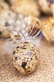 Quail eggs and feather lie on a cloth Royalty Free Stock Photos