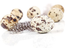 Quail eggs with feather Stock Photos