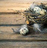 Quail eggs with feather Royalty Free Stock Images