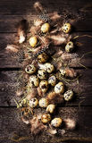 Quail eggs and feathers  on a gray wooden background. Royalty Free Stock Image