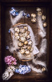 Quail  eggs with feathers and hyacinths flowers in vintage wooden box, top view. Royalty Free Stock Photo