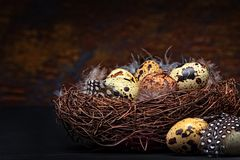 Quail eggs and feathers in a nest Royalty Free Stock Photos