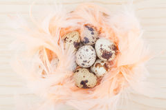 Quail eggs in feathers nest. On wooden background Stock Photography