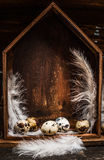 Quail eggs with feathers in rustic wooden box in form of house. Stock Photo