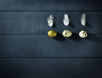 Quail eggs with feathers on the table Royalty Free Stock Photo