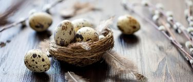 Quail eggs, feathers, willow branches on a wooden table. Vintage effect. Selective focus Banner royalty free stock photos