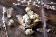 Quail eggs, feathers, willow branches on a wooden table. Vintage effect. Selective focus stock images