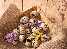 Quail eggs and flowers Royalty Free Stock Photography