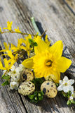 Quail eggs with flowers Stock Image