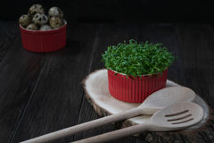 Quail eggs, fresh cress salad and kitchen tools. Healthy  food concept Stock Image