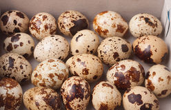 Quail  eggs full frame Royalty Free Stock Photo